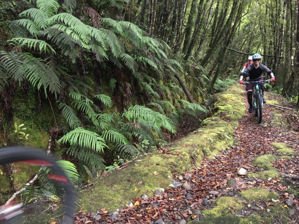 Best Mountain Biking Nelson NZ
